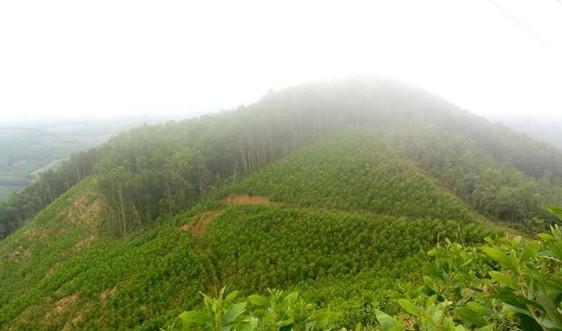 Phối hợp quản lý bảo vệ rừng giáp ranh 3 tỉnh Quảng Ngãi, Quảng Ngãi và Kon Tum