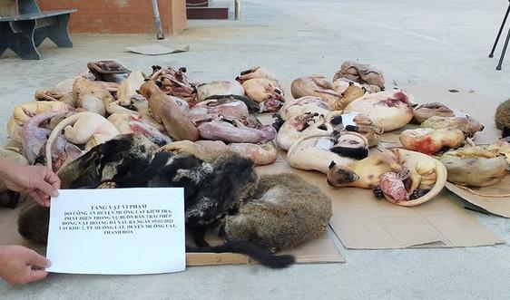 Thanh Hóa: Phát hiện hơn 200 kg động vật hoang dã trong tủ bảo ôn