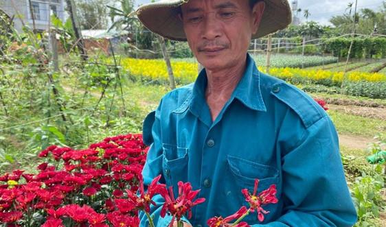 Liên tiếp các vườn hoa bán Tết ở Quảng Ngãi bị phá hoại