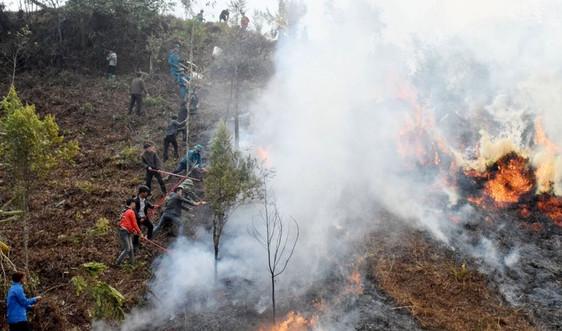 Lào Cai: Tăng cường công tác bảo vệ và phòng chống cháy rừng