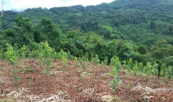 """Lai Châu: """"Tết trồng cây"""" phải gắn với chỉ tiêu phát triển lâm nghiệp bền vững"""