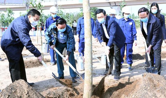 Bộ TN&MT triển khai xây dựng cơ sở dữ liệu bản đồ cây Việt Nam (Tree Map) để quản lý, chăm sóc cây xanh
