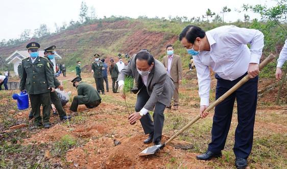 Quảng Nam: Hưởng ứng Chương trình trồng 1 tỷ cây xanh