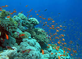Phối hợp quản lý Chương trình điều tra tài nguyên, môi trường biển và hải đảo