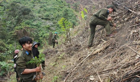 """Quảng Nam: Trả """"nợ"""" rừng xanh"""