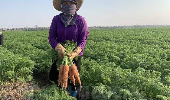 Hải Dương: Cấp thẻ cho nông dân ra đồng sản xuất