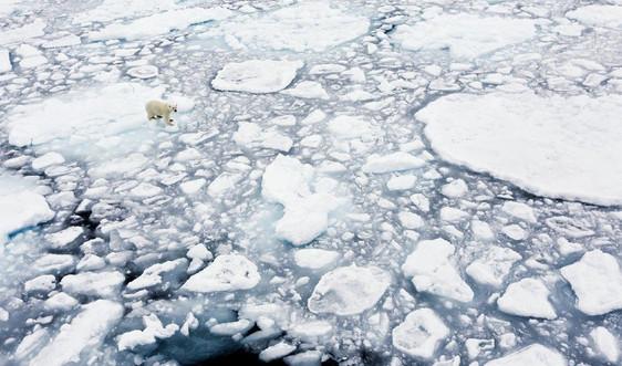 Hội đồng Bảo an Liên Hợp Quốc sẽ họp về tác động của biến đổi khí hậu