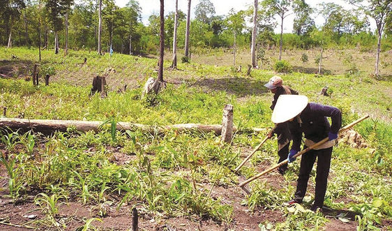 Tập trung thanh tra đất có nguồn gốc từ nông, lâm trường