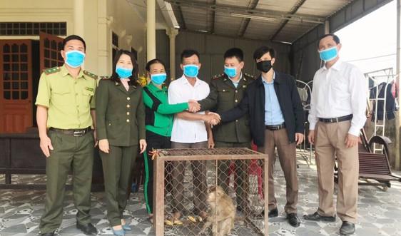 Hà Tĩnh: Người dân tự nguyện giao nộp cá thể khỉ đuôi lợn quý hiếm