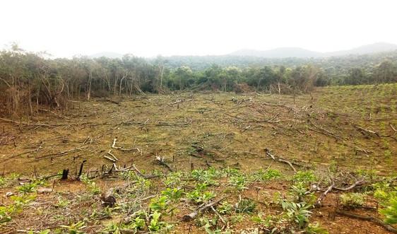 Quảng Bình: Phê duyệt kết quả theo dõi diễn biến rừng năm 2020