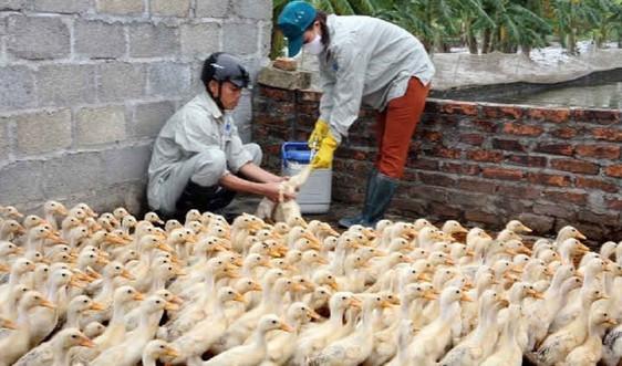 Nghệ An: Ra công điện khẩn phòng chống dịch Cúm gia cầm