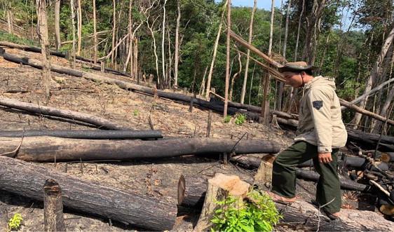 Đắk Lắk: Nhiều diện tích rừng bị lấn chiếm, xâm canh