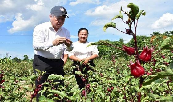 Thừa Thiên Huế: Phát triển sản phẩm OCOP từ sự đặc trưng, ưu thế riêng