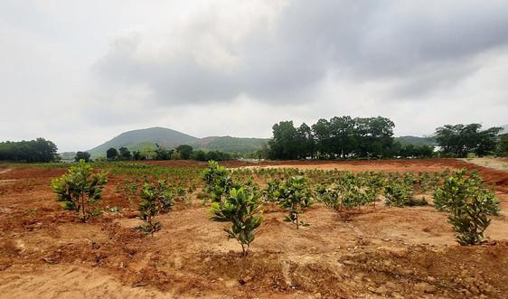 Nông Cống - Thanh Hoá: Siết chặt công tác bảo vệ môi trường đối với mỏ đất