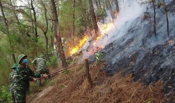 Nghệ An: Phòng cháy, chữa cháy rừng là nhiệm vụ trọng tâm