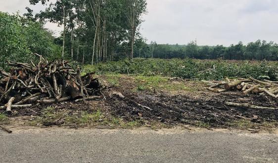 Bà Rịa - Vũng Tàu: Cảnh báo tình trạng phân lô, mua bán đất nông nghiệp trái quy định