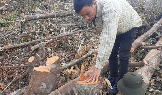 Khánh Hòa: Ai chịu trách nhiệm khi rừng Suối Tân bị đốn hạ?