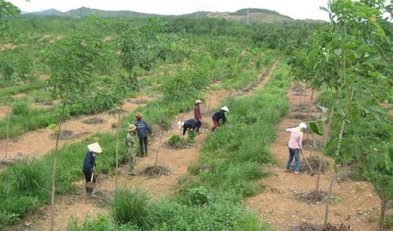 Quản lý đất đai có nguồn gốc nông, lâm trường: Quá chậm!
