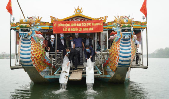 Thả hơn 41.000 cá giống xuống sông Hương để tái tạo nguồn lợi thủy sản