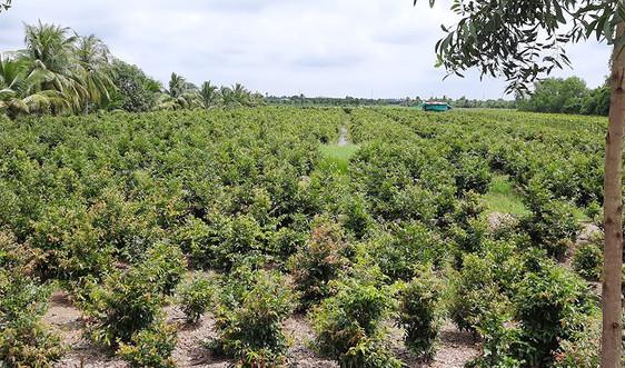 Long An: Tập trung chuyển đổi cây trồng thích ứng với BĐKH