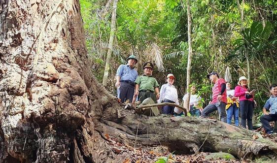 Quảng Nam đánh sập các hầm khai thác vàng trái phép tại Vườn quốc gia
