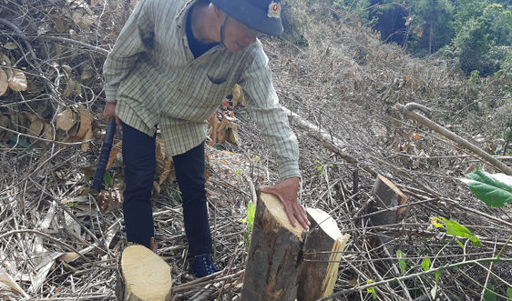 Khánh Hòa: Thủ tướng chỉ đạo kiểm tra, xử lý vụ phá rừng xã Suối Tân