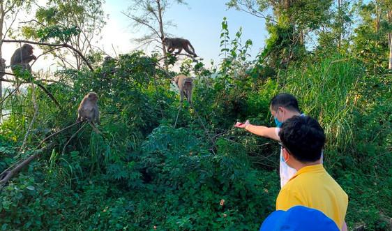 """Đà Nẵng: """"Biệt đội"""" bảo vệ khỉ vàng ở Sơn Trà"""