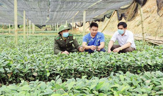 Lào Cai: Chú trọng giống cây để phát triển trồng rừng
