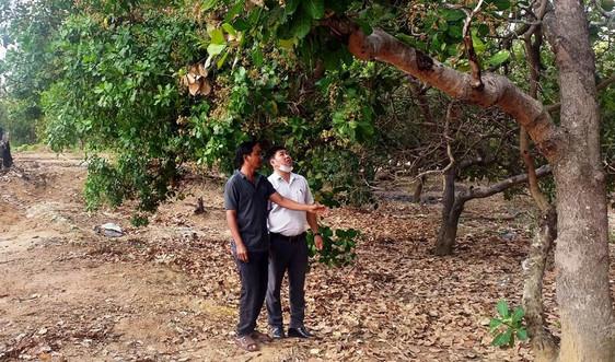 """Chư Prông (Gia Lai): Khẩn trương cấp """"sổ đỏ"""" cho diện tích đất ngoài quy hoạch 3 loại rừng"""