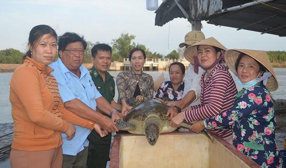 Bến Tre: Thả cá thể rùa nặng 45 kg quý hiếm về biển