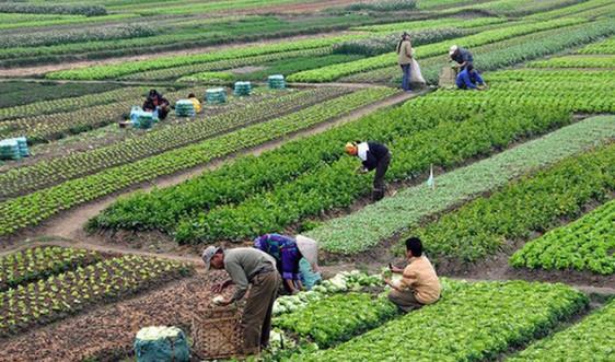 Có được chuyển nhượng đất nông nghiệp trong quy hoạch?