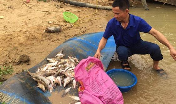 Nghệ An: Đang xác minh nguyên nhân cá chết ở sông Con