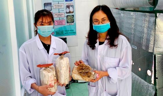 Sinh viên Đà Nẵng thành công với mô hình trà hoa nấm đầu tiên tại Việt Nam