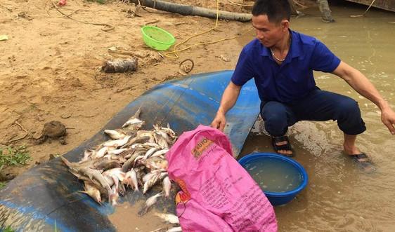 Nghệ An: Chưa tìm ra nguyên nhân cá chết ở sông Con