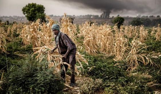 Hơn 30 triệu người có nguy cơ rơi vào cảnh nạn đói nghiêm trọng