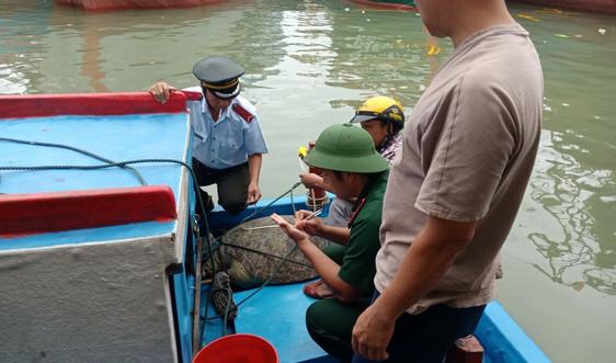 Bình Định: Người dân tự nguyện thả rùa quý về biển