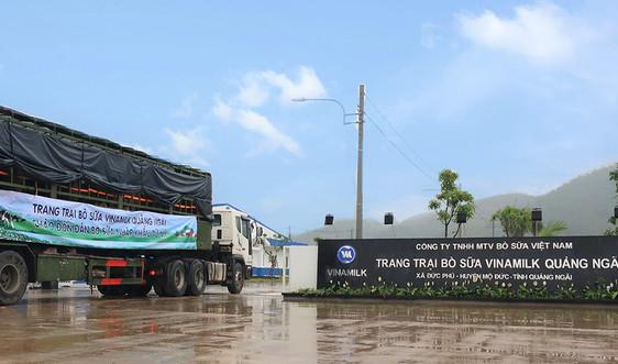 Vinamilk đón thành công 2.100 con bò sữa từ Mỹ về trang trại mới ở Quảng Ngãi