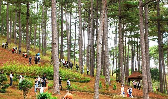 Lâm Đồng ban hành quy định tạm cho thuê môi trường rừng