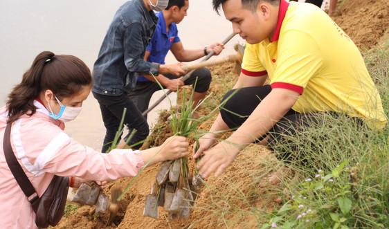 Thừa Thiên Huế: Trồng cỏ vetiver chống sạt lở, xói mòn đất
