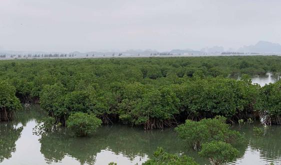 """Quảng Ninh: Thiết lập """"hành lang xanh"""" bảo vệ bờ biển"""