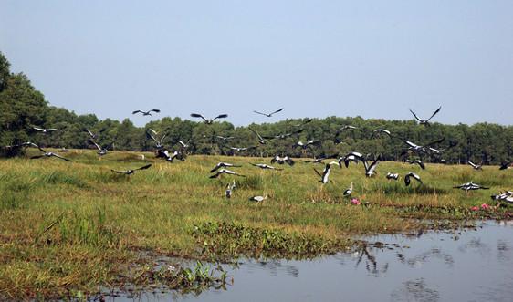 Bảo tồn các loài chim hoang dã, di cư tại Việt Nam