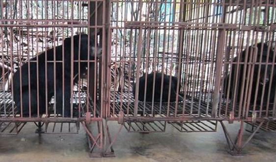 Thanh Hóa: Vận động các hộ dân chuyển giao Gấu nuôi cho Nhà nước