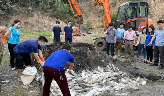 Thanh Hóa: Gần 30 tấn cá chết bất thường ở hai huyện ven biển