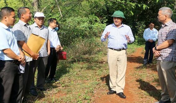 Đắk Nông: Kiểm tra, chỉ đạo xử lý vụ lấn chiếm rừng phòng hộ thuỷ điện Đắk R'Tih