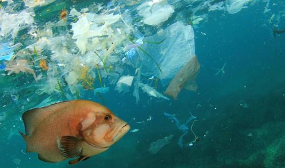 Hạt vi nhựa và tác động tiềm ẩn