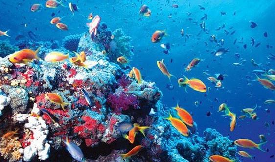 Biến đổi khí hậu làm thay đổi môi trường sống của sinh vật biển