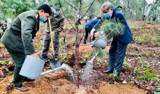 Huế: Phấn đấu trồng mới ít nhất 7 triệu cây xanh giai đoạn 2021 - 2025