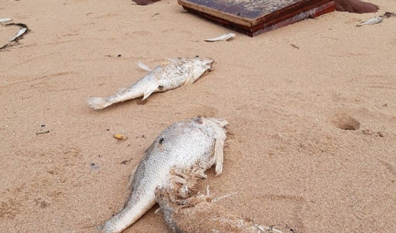 Vụ cá chết bất thường ở biển Nghi Thiết (Nghệ An): Kết quả quan trắc không có dấu hiệu bất thường