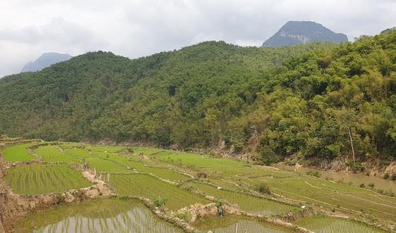 Thanh Hóa: Cấp chứng chỉ FSC hơn 19.000ha rừng
