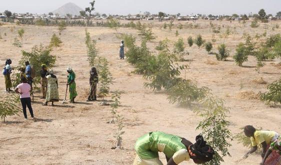 Biến đổi khí hậu làm nghèo đói thêm trầm trọng